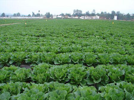 10万亩标准化蔬菜基地项目