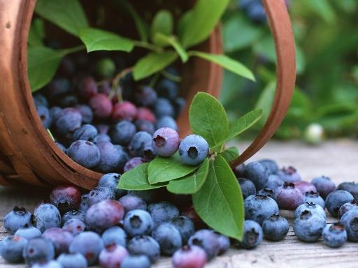 现代蓝莓综合开发