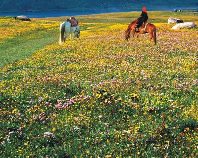甘孜州萃缘国际旅行社有限公司100%股权