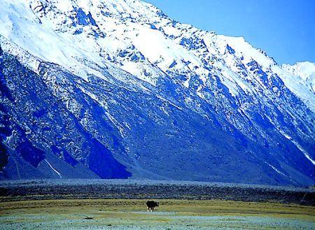 西藏昌都地区马查拉煤矿有限责任公司100%股权