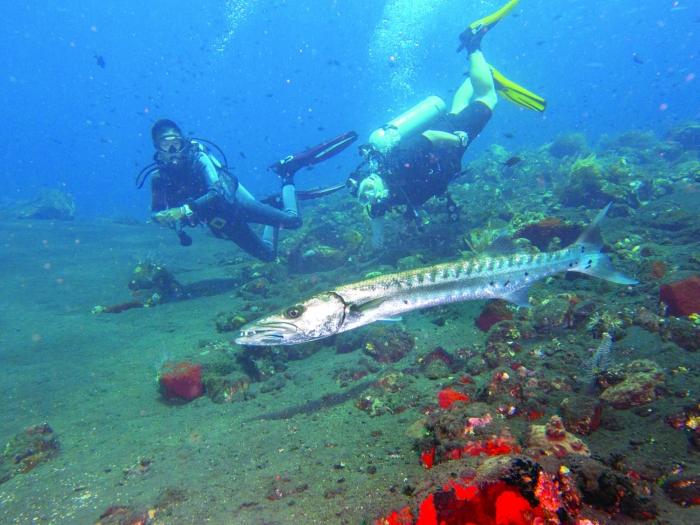 成都女孩海岛开店教潜水