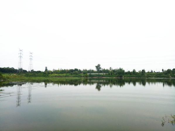 鲁家滩:水天一色的生态湿地