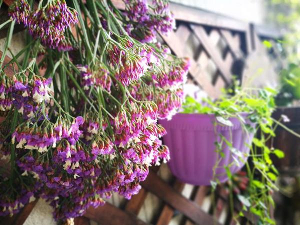 温江最美花园阳台邻里周获奖名单出炉,快看看你喜欢的阳台入围没?