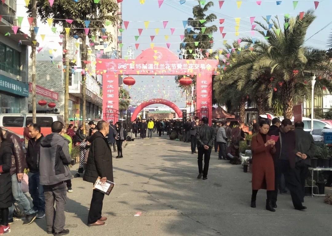 温江第15届兰花节正式开幕 普通兰草让市民购买无压力